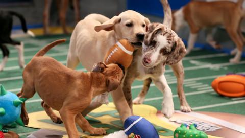 Dallas Animal Services Wins Big in Uber Puppy Bowl