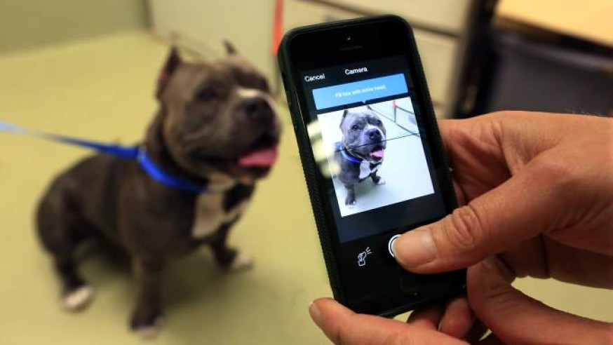 Finding Rover will use facial recognition to find lost dogs