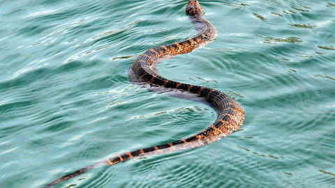 Yikes! Flooding brings increase in local snake population