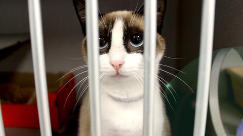 Dallas Animal Services to Waive Adoption Fees – Aug. 15