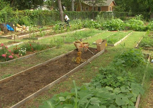 Community Garden Grant Growing Organic Saving Water And Feeding The Hungry Dallas City News