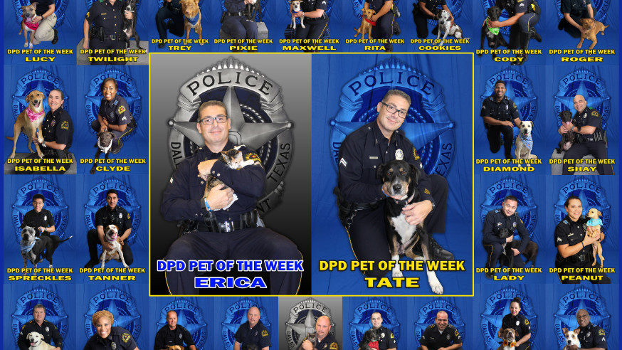Dallas Police Department enjoys 100 percent success rate in finding homes for furry friends