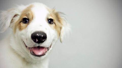 DallasPETS campaign addresses critical animal issues