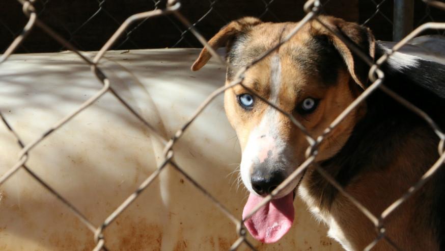 Inside City Hall: Dallas Animal Services