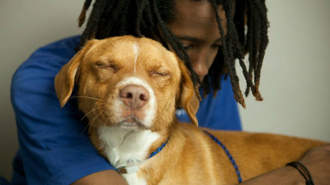 Dallas Animal Services showcases achievements at national conference