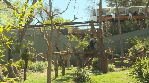 Dallas Zoo's popular monorail reopens