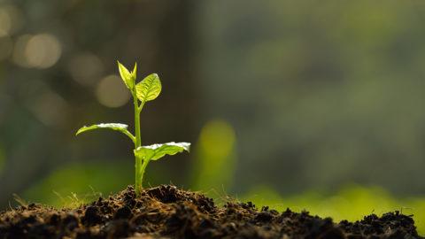 Green Business Certification Program to launch Nov. 15