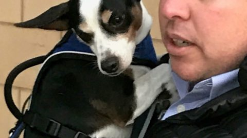 Lost at Love Field, Nelson the dog now reunited with owner