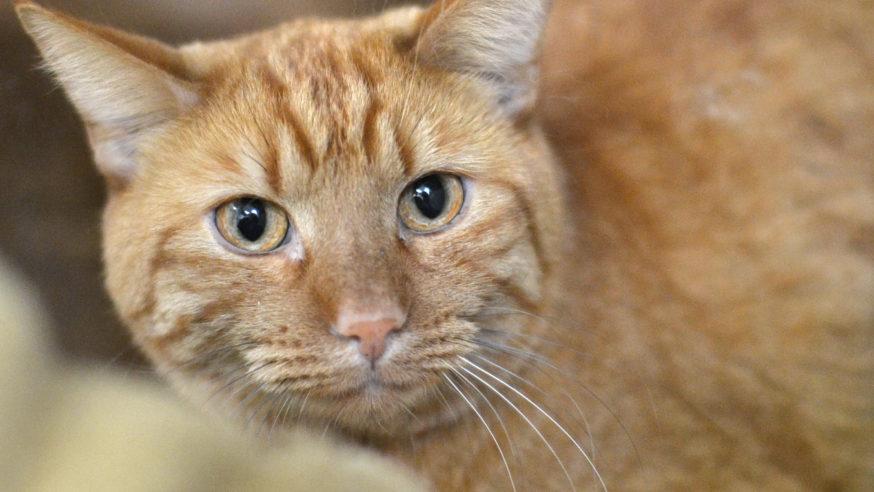 Lost Colorado cat rescued in Dallas