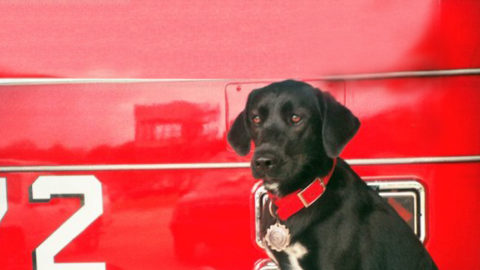 Dallas Fire Rescue K9 leaves behind a legacy