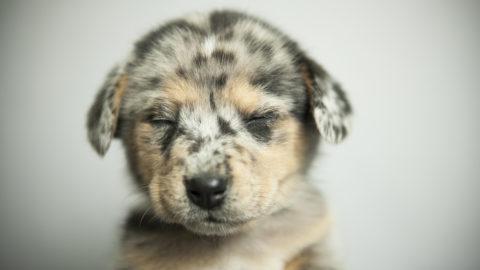 May adoption special at Dallas Animal Services