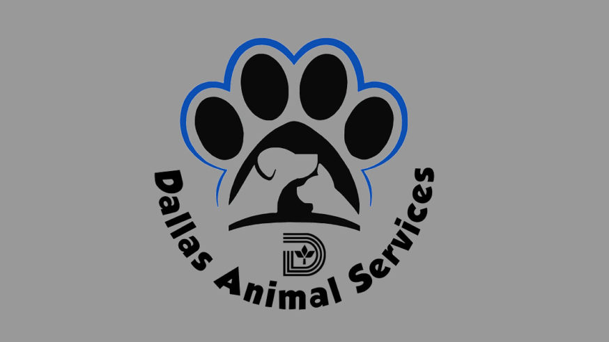 Meet the Candidates for Dallas Animal Services Director