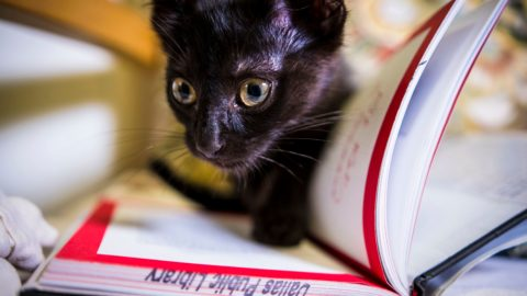 Dallas Animal Services and Dallas Public Library partner for feline-friendly adoption event