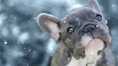 Prepping your pet for winter weather