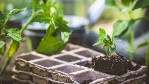 Gardening tools: three courses to help you get your garden growing right