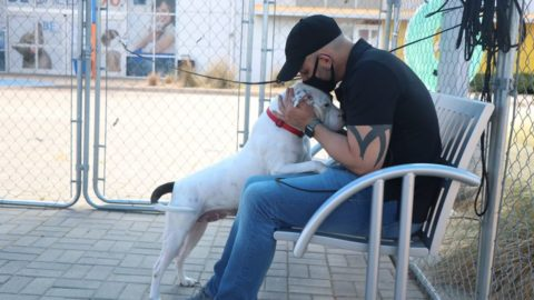 Tips to keep pets healthy, safe during the summertime