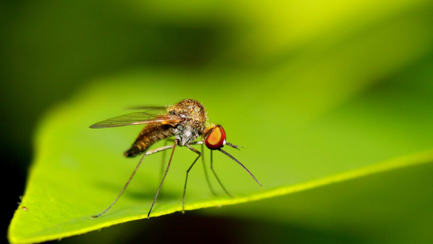 Preparations underway to protect Dallas residents during mosquito season