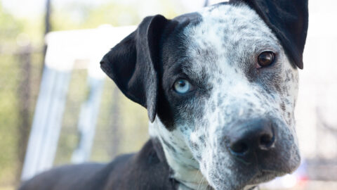 Dallas Animal Services encourages pet owner safety for Fourth of July weekend